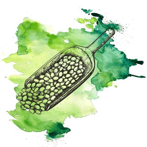 Bio-Hülsenfrüchte